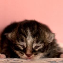 baby Ludwig