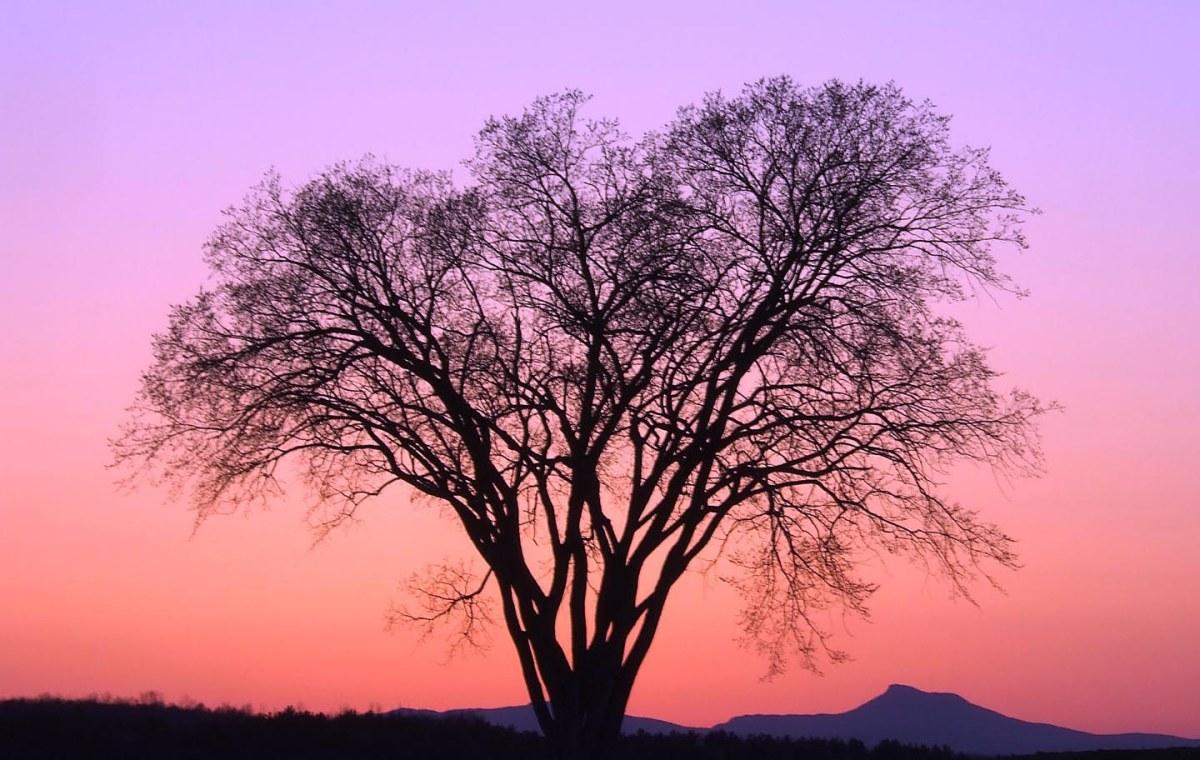 Per essere albero, Guatan Tavara