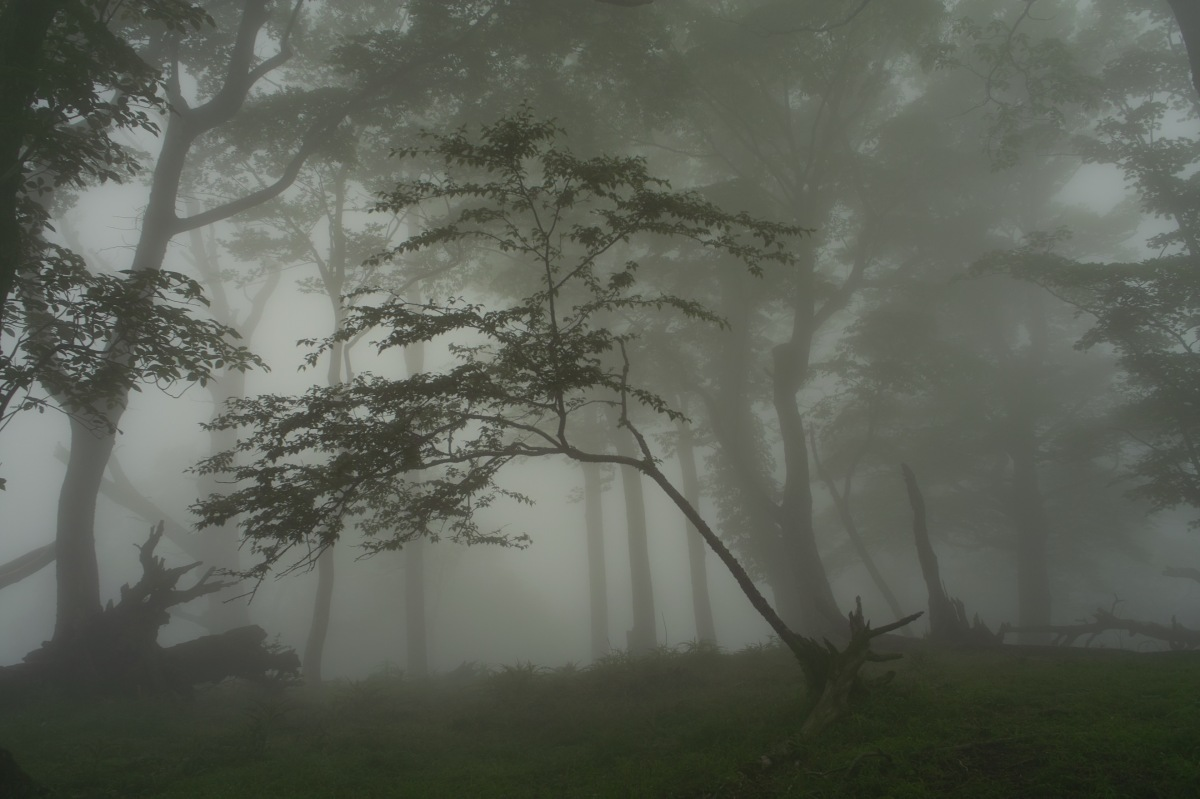 Nella nebbia, Hermann Hesse