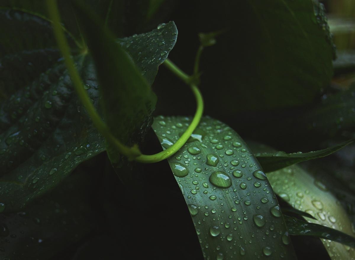 """Pioggia d'estate, da """"Dono d'amore"""", Rabindranath Tagore"""