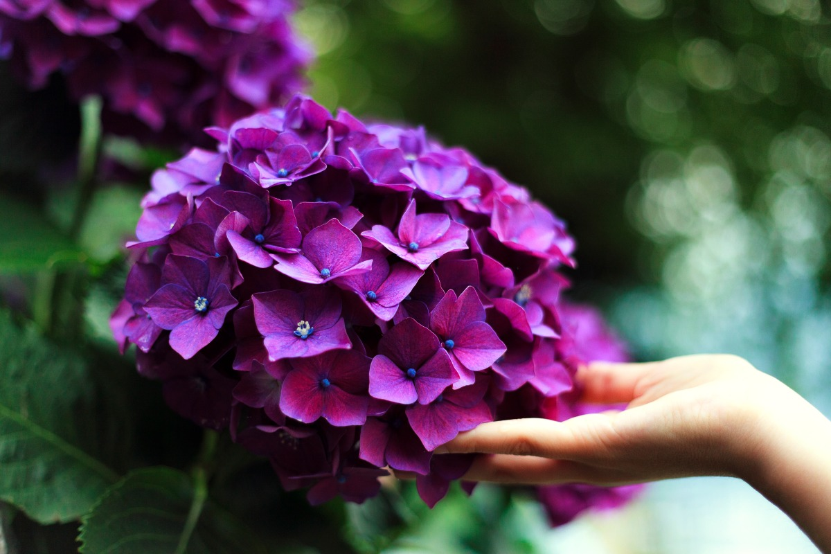 """Ti adoro, da """"Les Fleurs du Mal"""", Charles Baudelaire"""