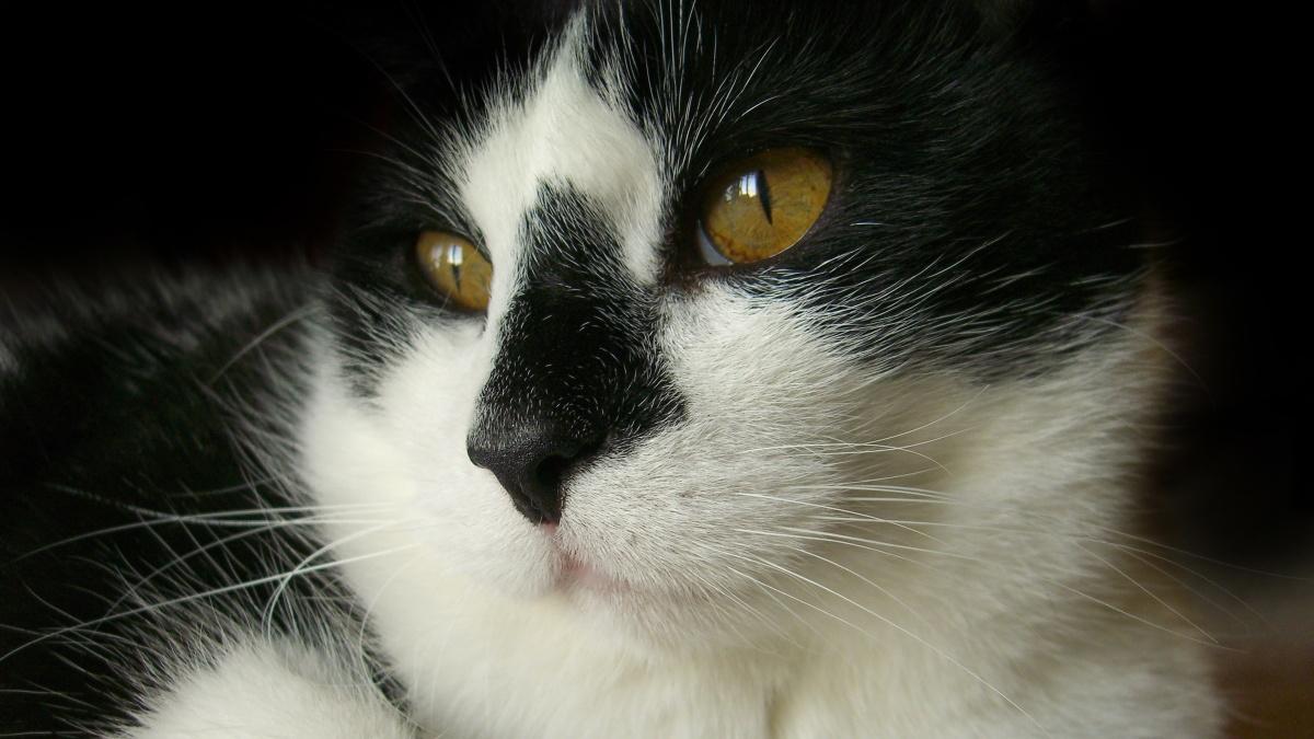 Il mio gatto lo scrittore, Charles Bukowski