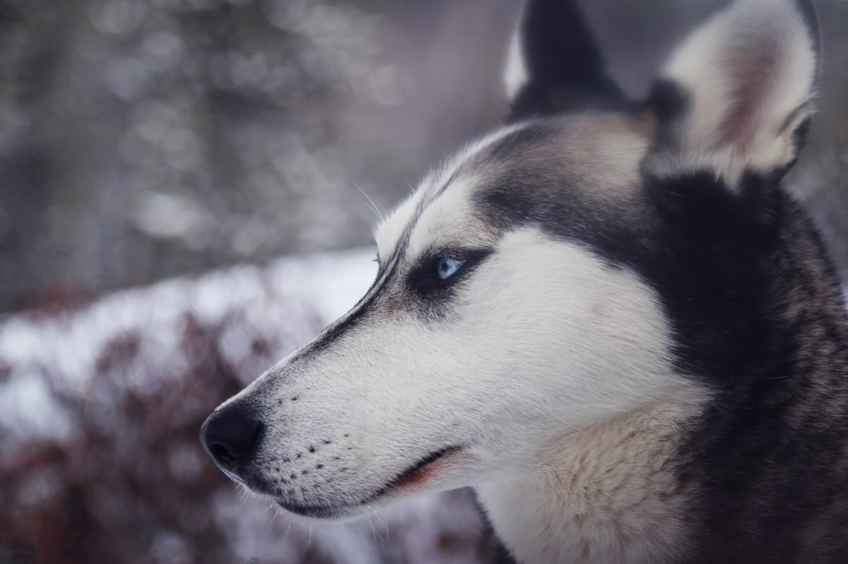 Monologo di un cane coinvolto nella storia, Wislawa Szymborska
