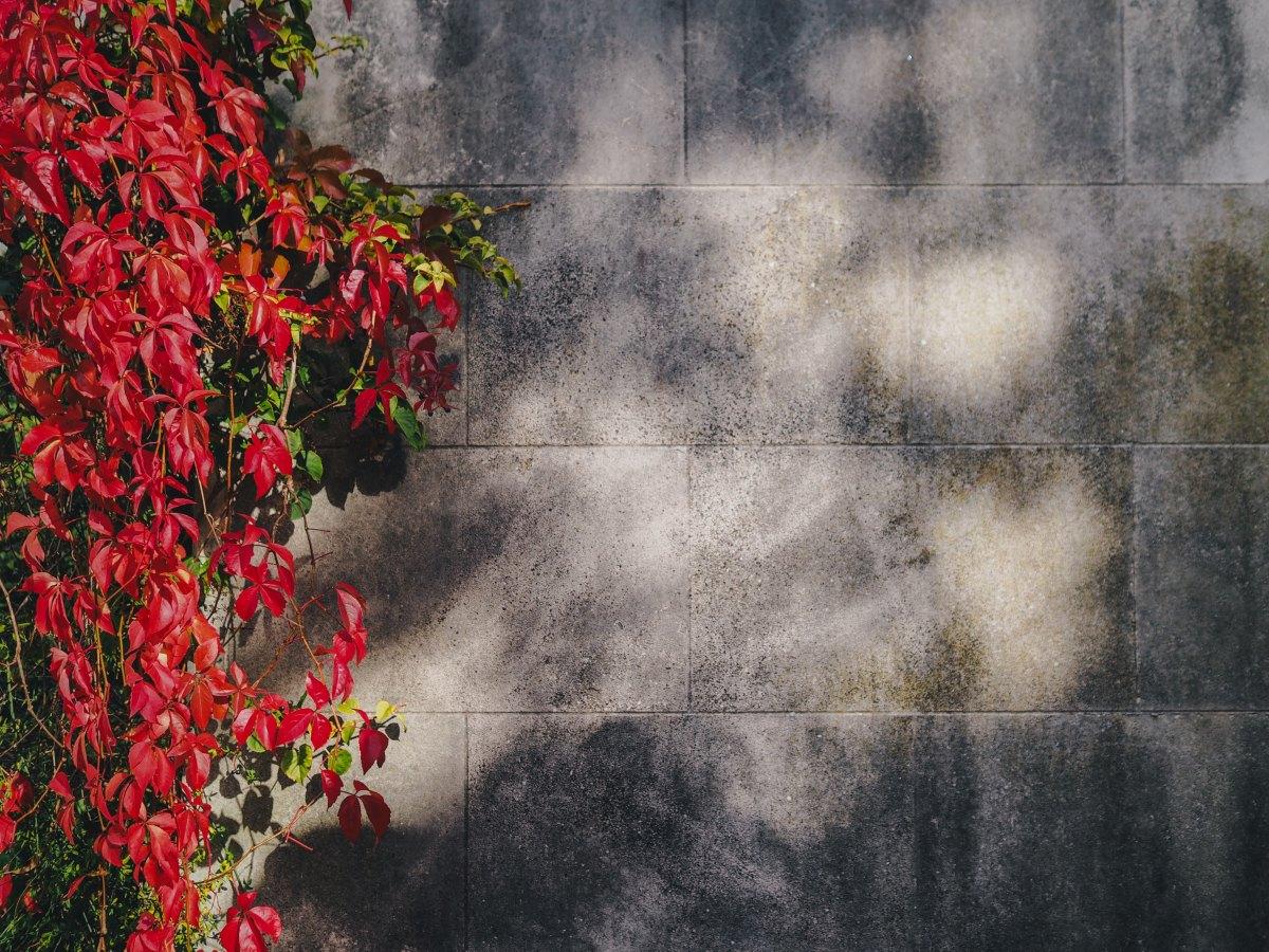 Mura, Konstantinos Kavafis