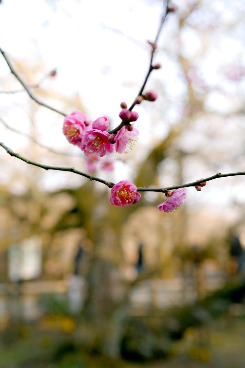 Una luce c'è in primavera, Emily Dickinson
