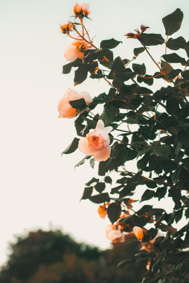 Il giardiniere, Mary Oliver