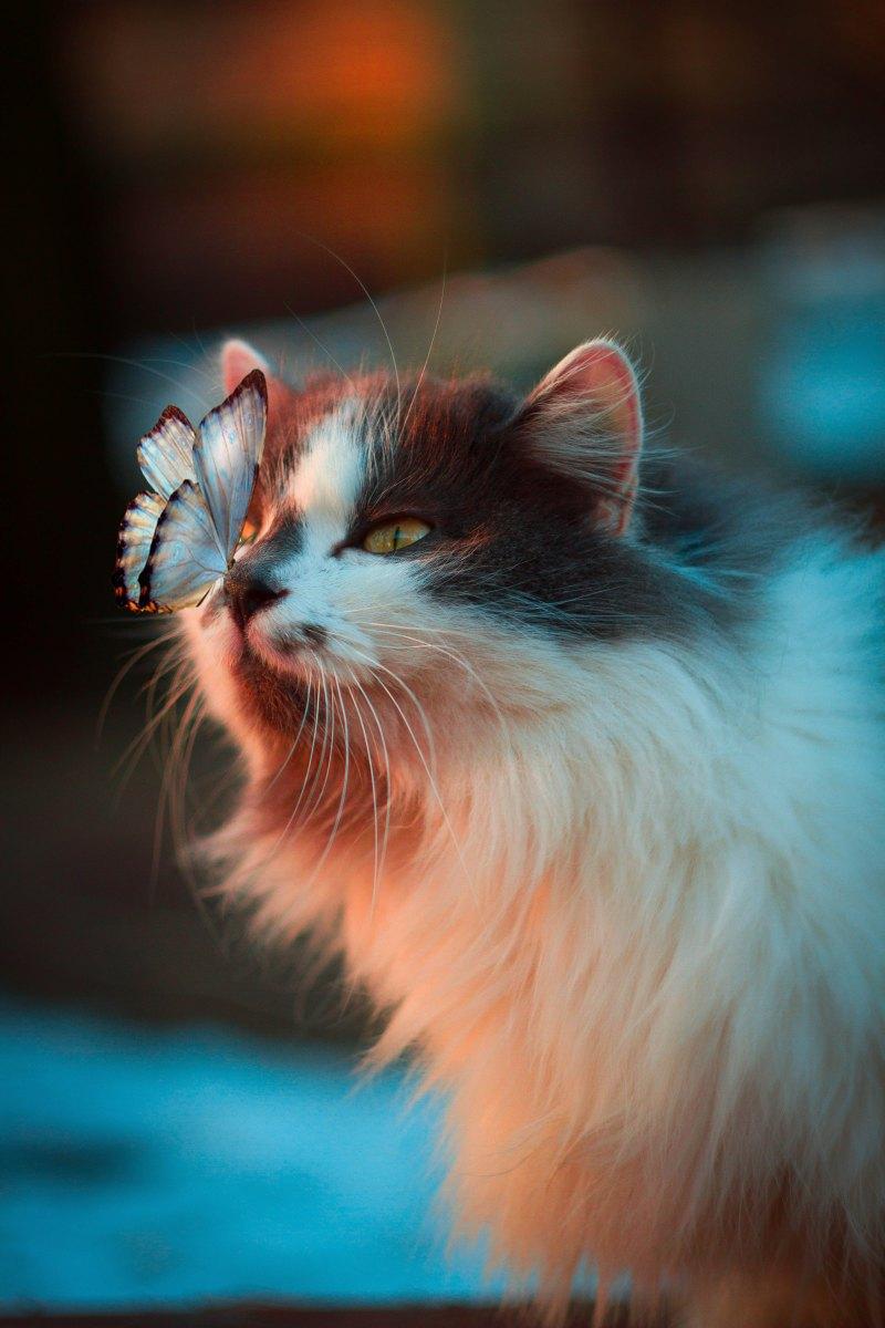 "Citazione da ""Sui gatti"", Charles Bukowski"