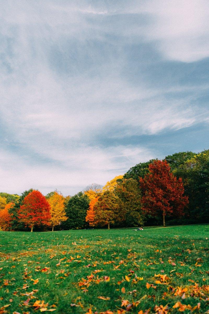 Come quando l'estate scivola nell'autunno, Emily Dickinson