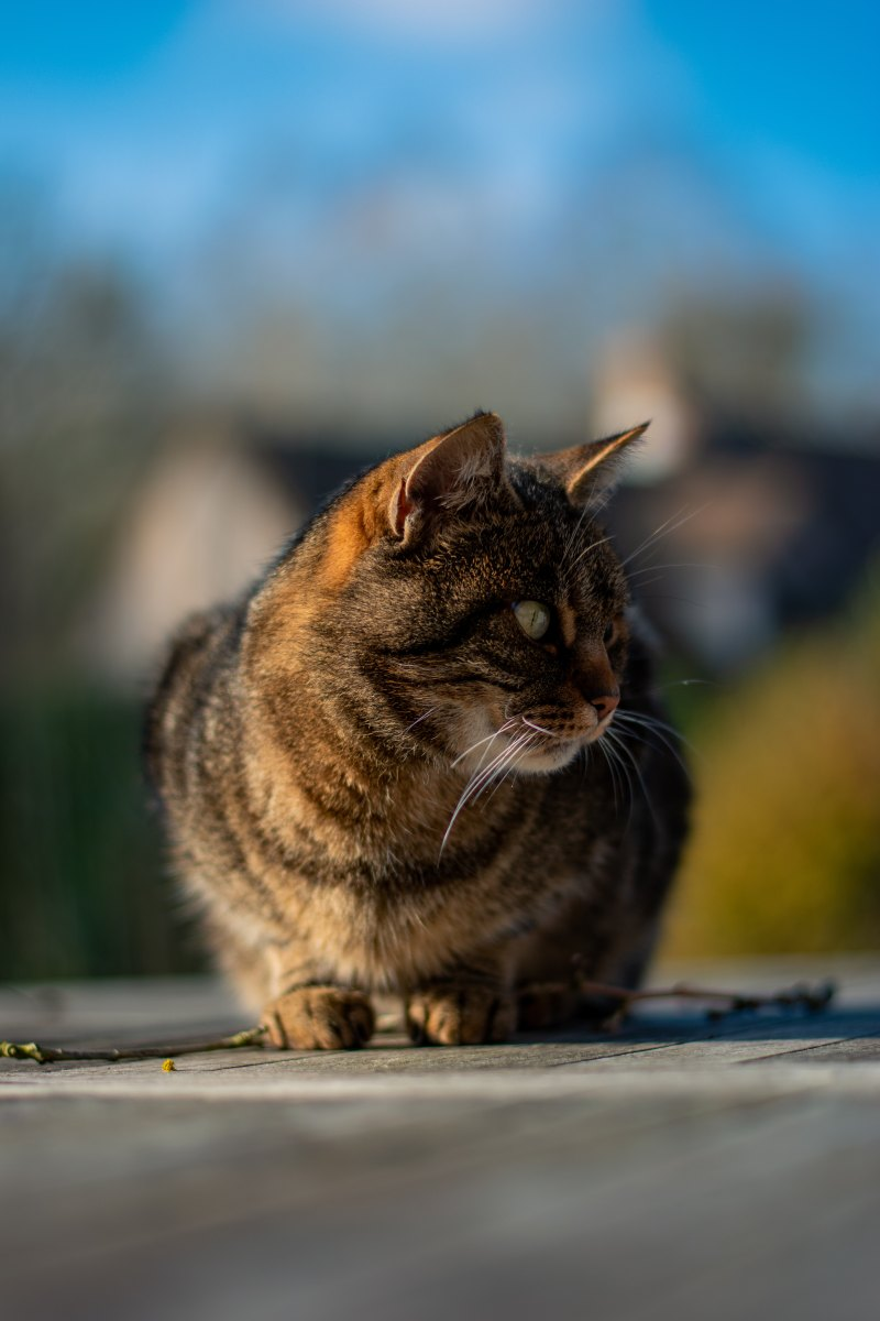 "Citazione da ""Sui gatti"" (2015), Charles Bukowski"