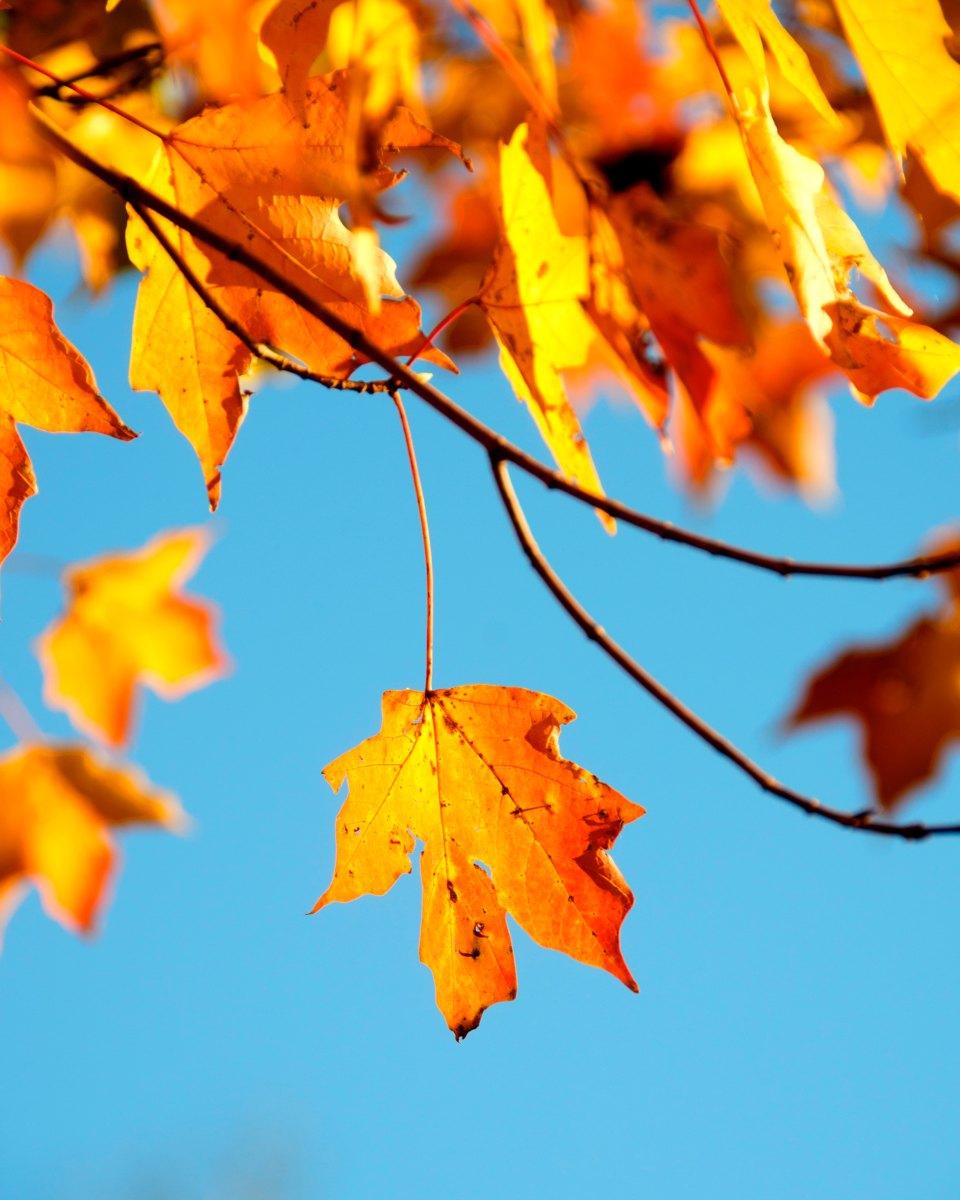 Albero in autunno, Hermann Hesse