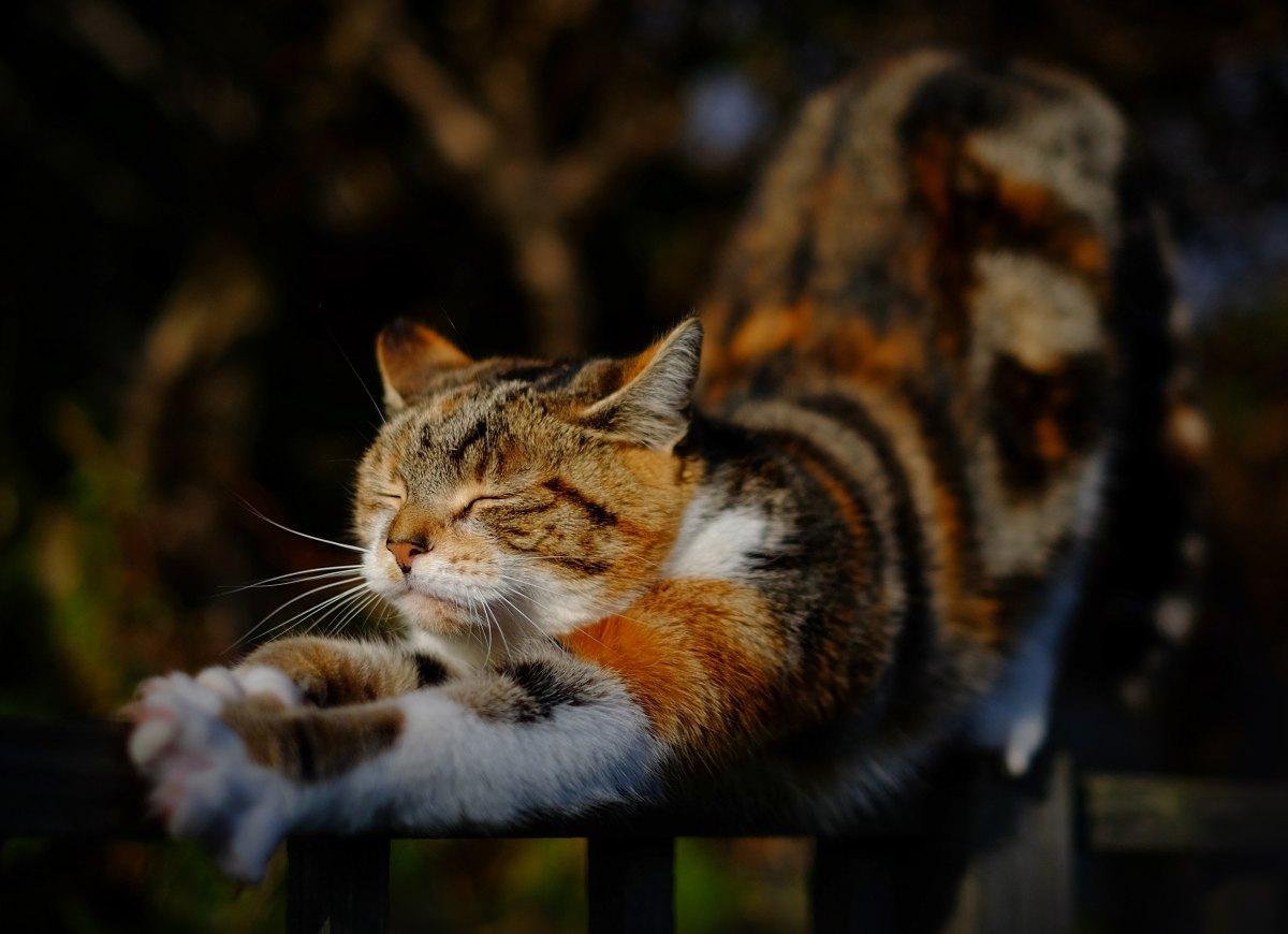 """Un gatto passa... da """"Sui gatti"""", Charles Bukowski"""
